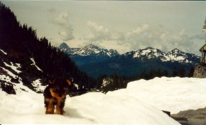 Kahsha at Mount Baker